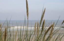 Duin en zee